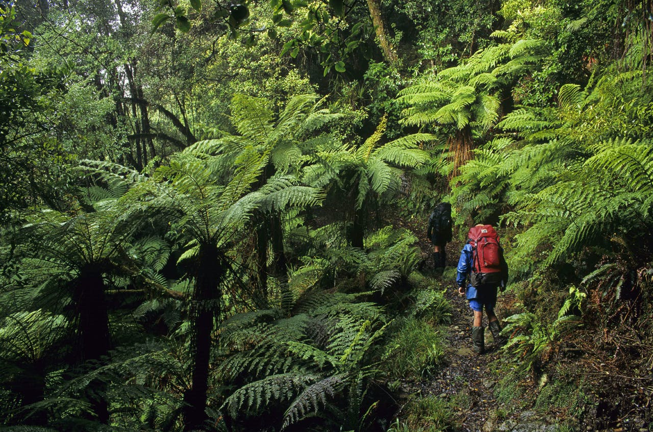 : Matemateaonga Track is often referred to as the milford track of the North Island. Photo: Shaun Barnett