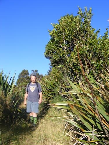 Regenerating bush south of Burns Saddle. Photo supplied