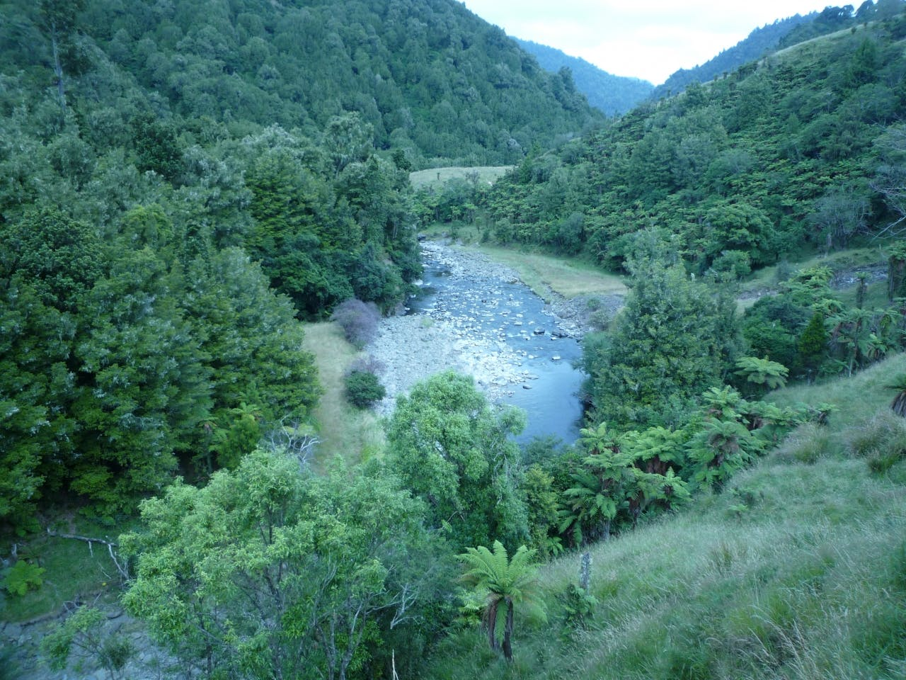 Koranga Stream. Photo supplied