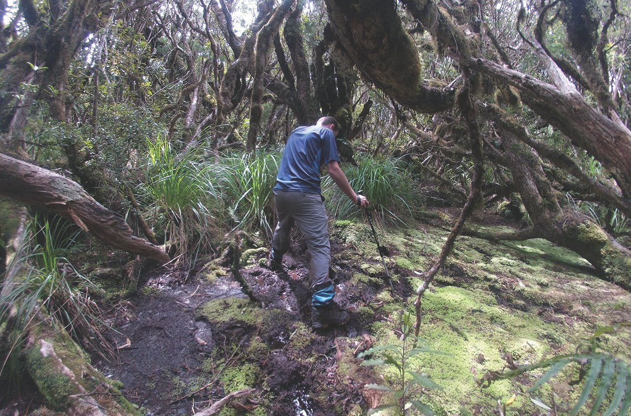 Am I stuck? Navigating the the bog on Table Mountain. Photo: Matthew Pike