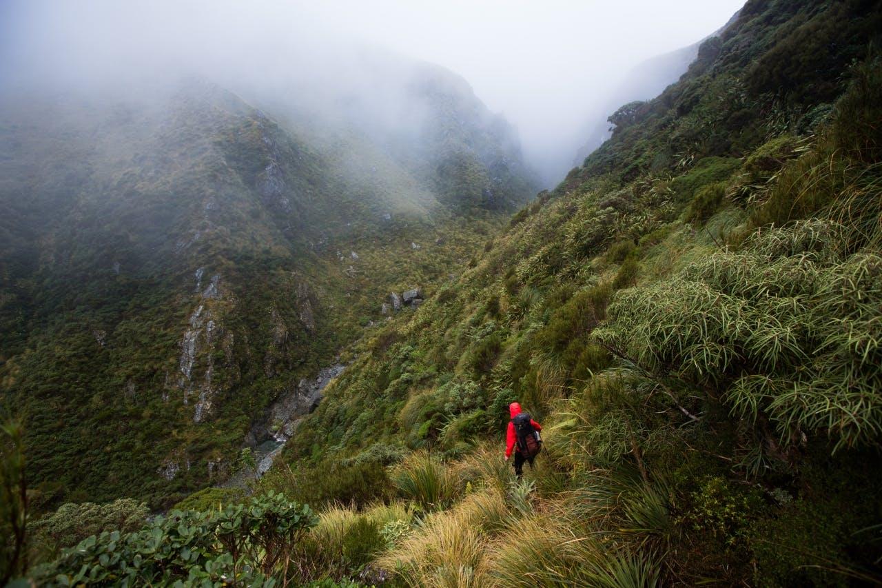Cloud and rain at the head of the Toaroha