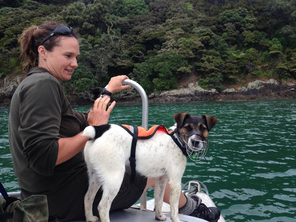 Angela and Macca on their way to another mustelid-detection job