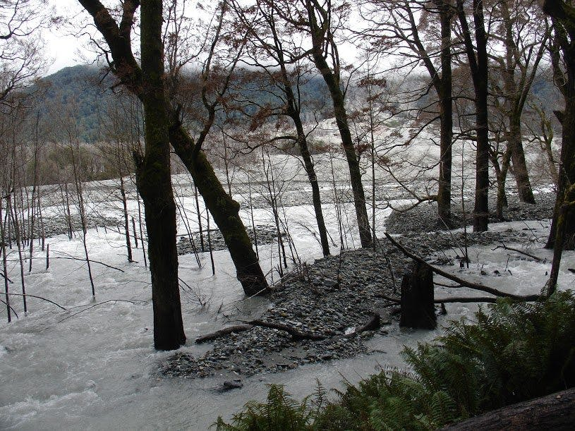 A flooding Dart River has caused extensive damage. Photo: DOC