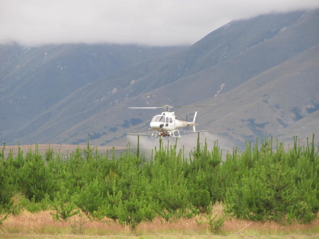 CAP: The 'armageddon' herbicide is sparyed on wilding conifers at Pukaki Downs. Photo: DOC