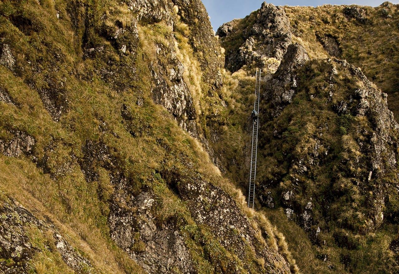 Trampers on Tararua Peaks ladder. Photo: Shaun Barnett/Black Robin Photography