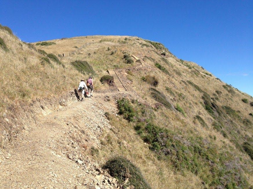 Climbing the Paekakariki Escarpment Track, which should be completed early next year. Photo: Te Araroa Trust