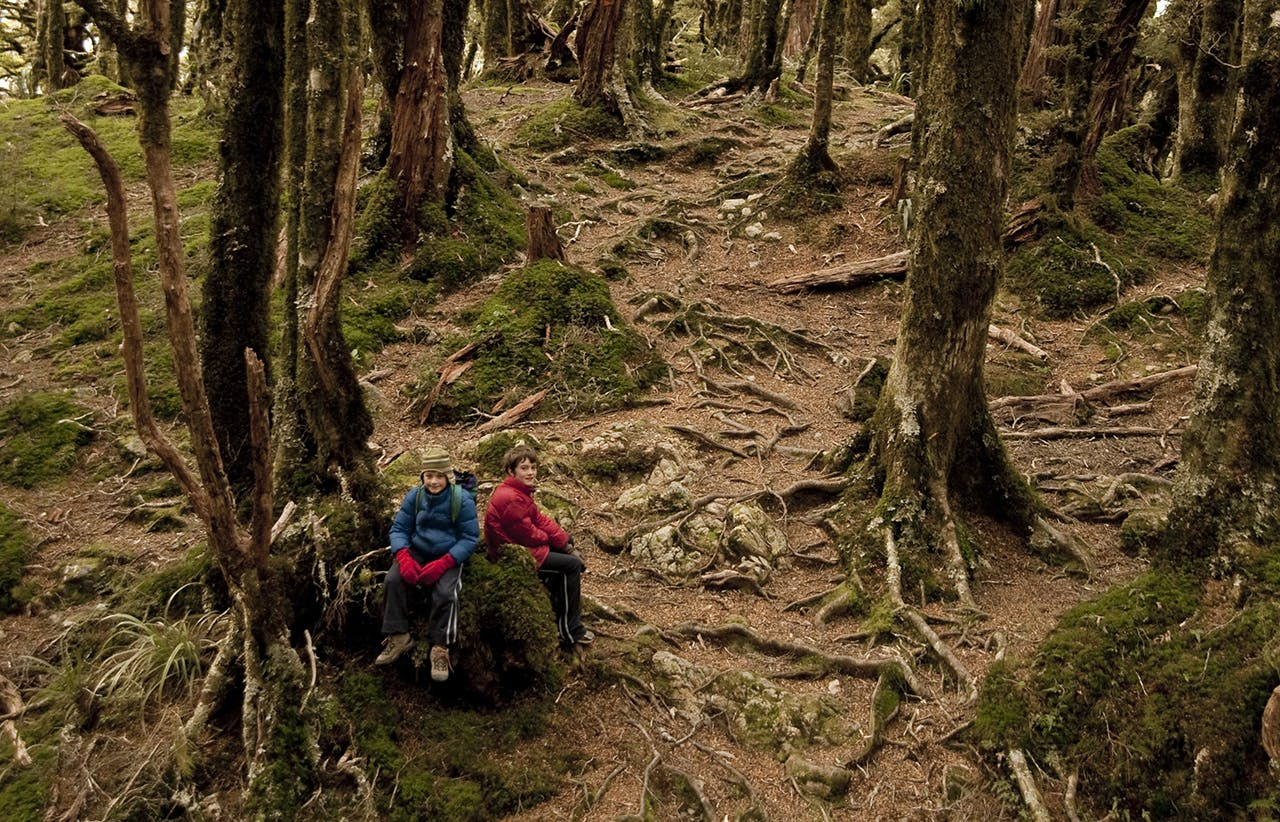 Silver beech forest on the Mt Holdsworth Track to Powell Hut. Photo: Shaun Barnett/Black Robin Photography