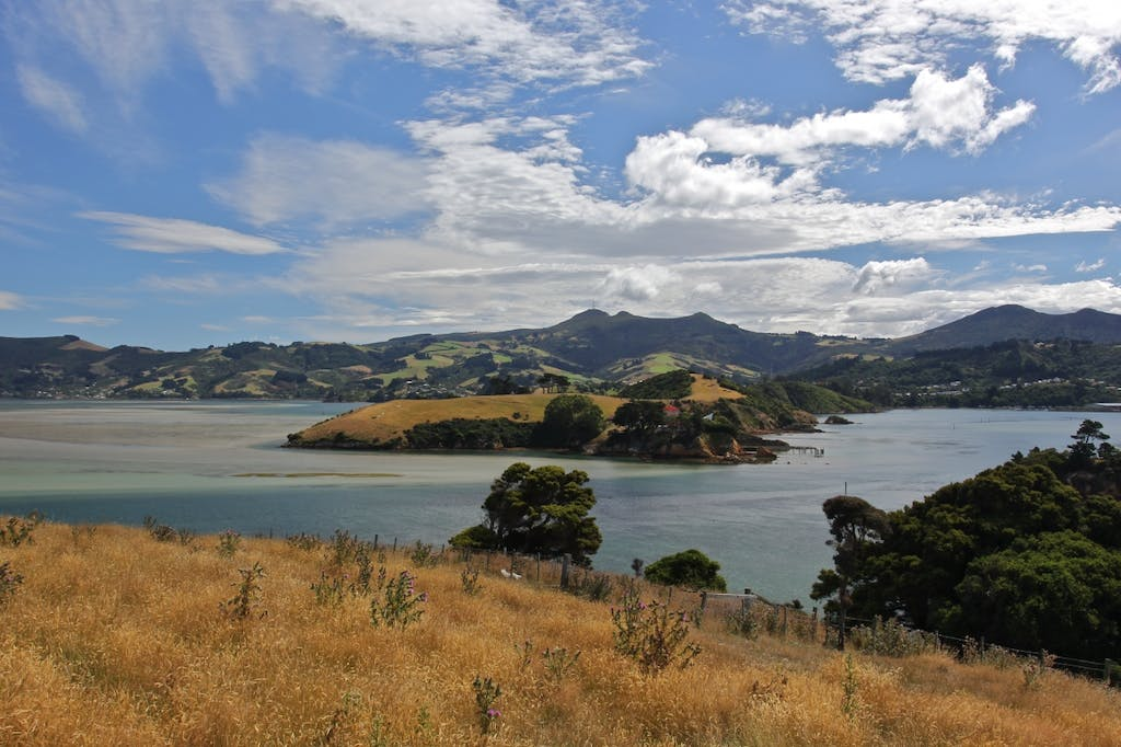 Quarantine Island from the Otago Peninsula. Photo supplied