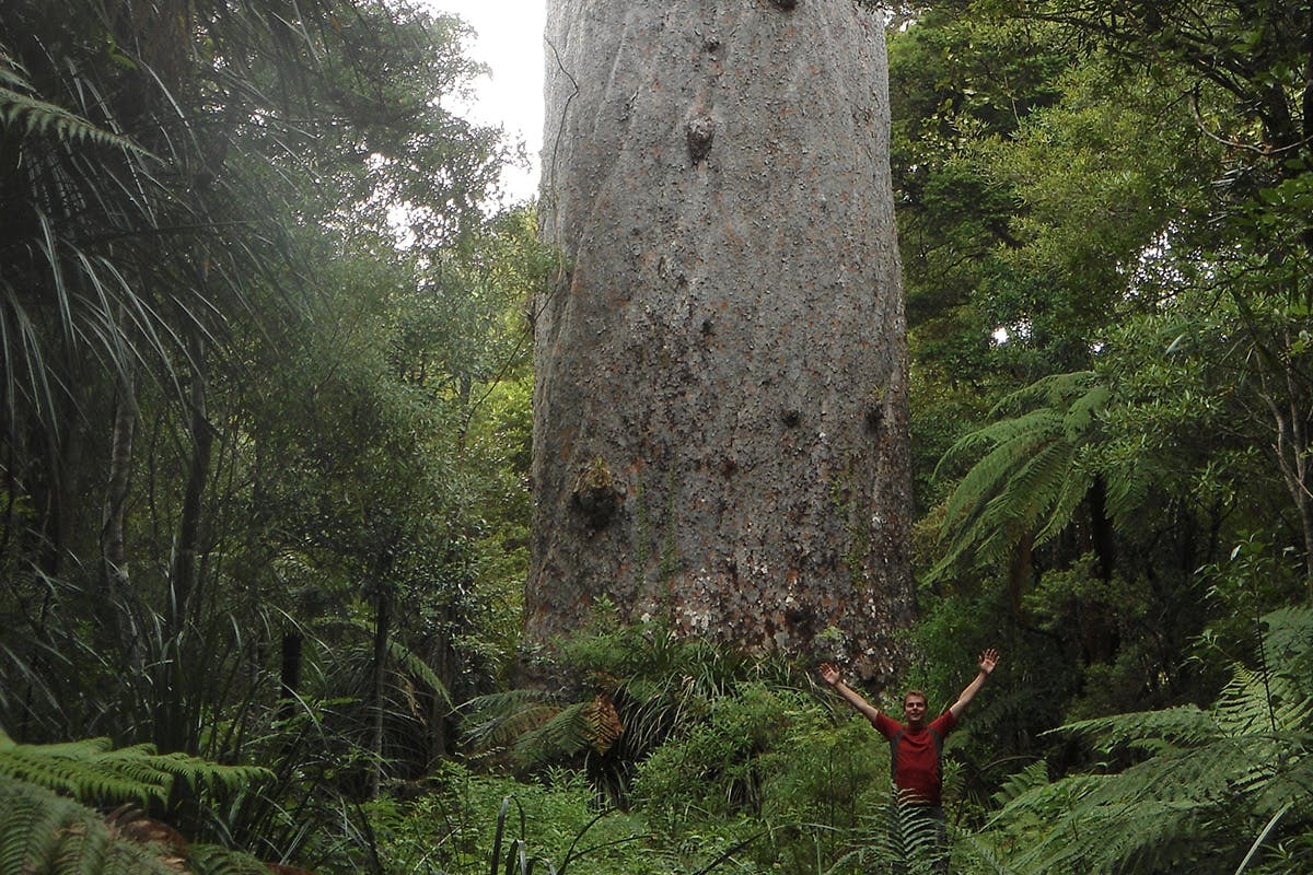 DOC's director general Lou Sanson is keen to get the ball rolling on creating a 'Kauri National park' in Northland. Photo: Wilderness