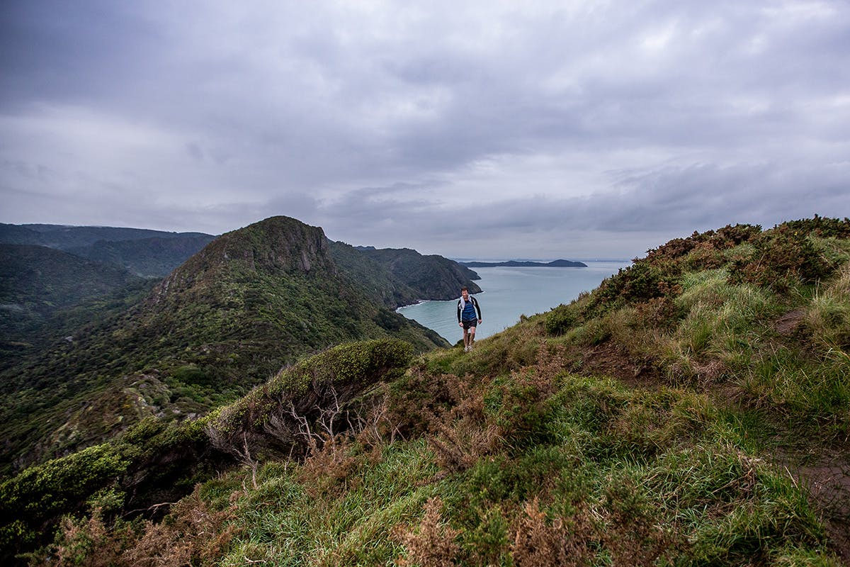 Views from Omanawanui Track are the best in the Waitakeres. Photo: Shaun Collins