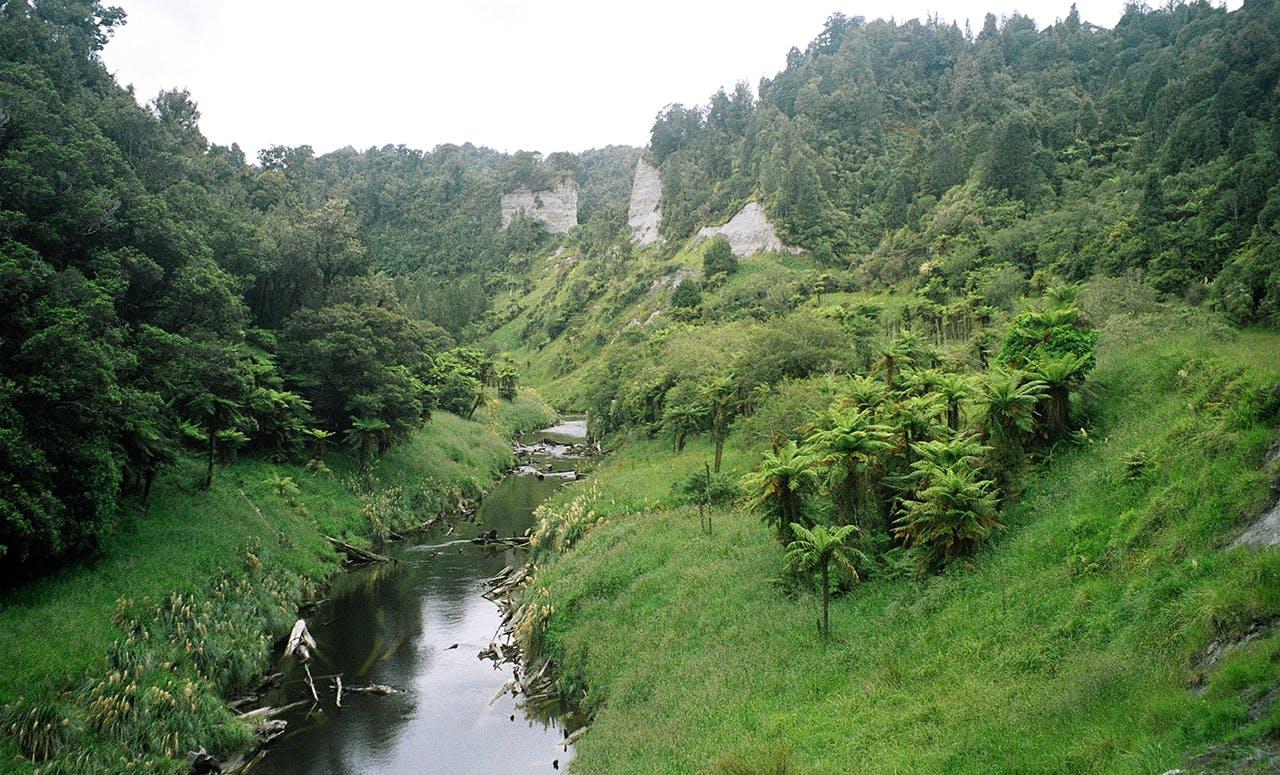 Moki Track, Makino Conservation Area - Hiking & Tramping in