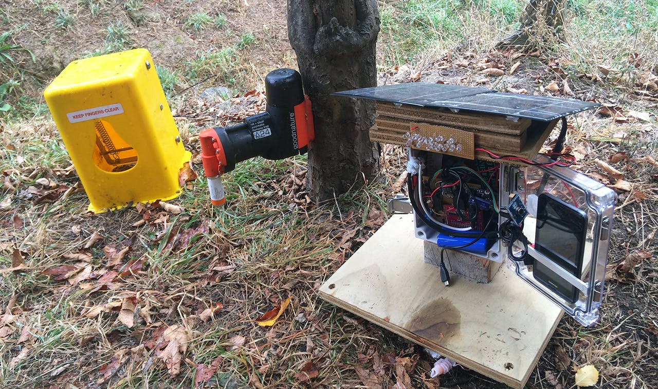 The solar-powered cacophonometer will measure the dawn chorus and could act as a lure to predators. Photo: Supplied