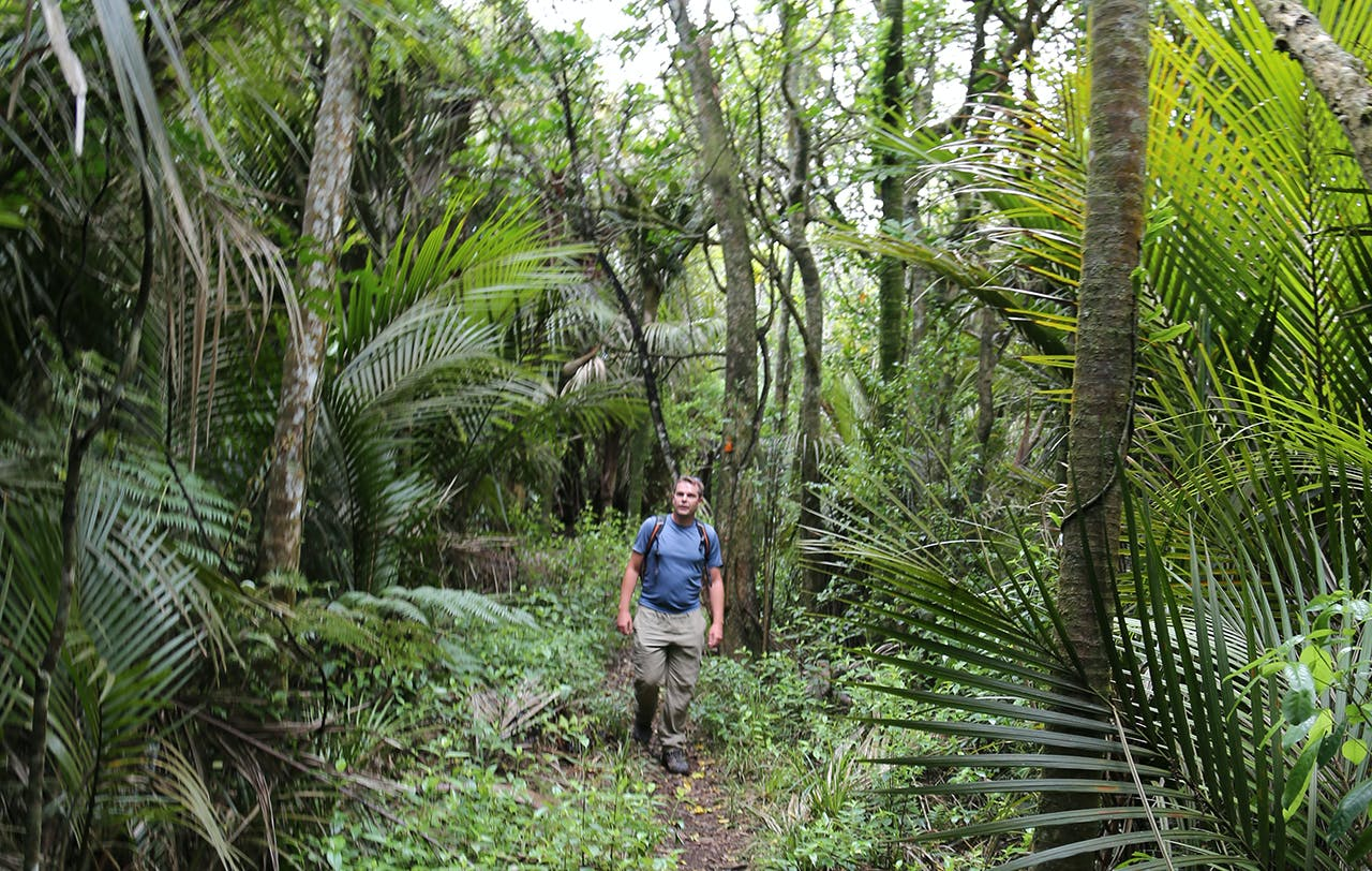 The Hakarimata Walkway is a rough ground trail but the bush is beautiful. Photo: Alistair Hall