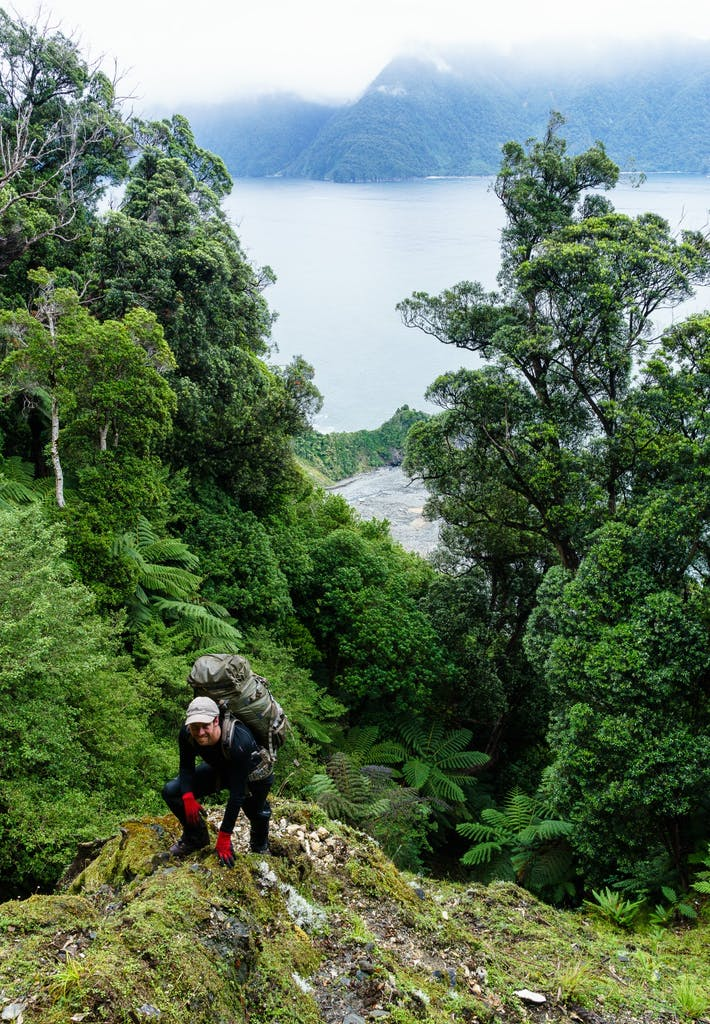 Glen ascending a steep landslip scarp, north of Milford Sound. Photo: Grant Dixon