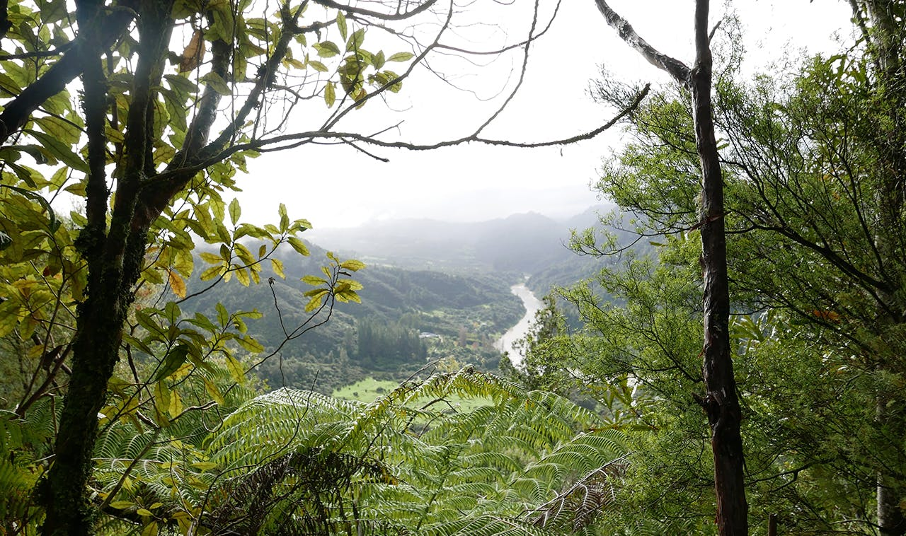 View of the Whanganui River from the Matemateaonga Track. Photo: Kathy Ombler