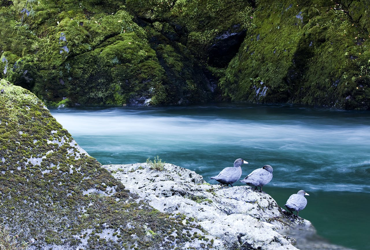 The Wangapeka River is a security site for the threatened whio. Photo: Ray Salisbury