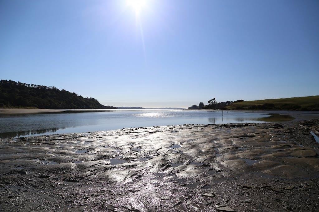 Okura estuary, home to a thriving marine reserve. Photo: Meghan Walker
