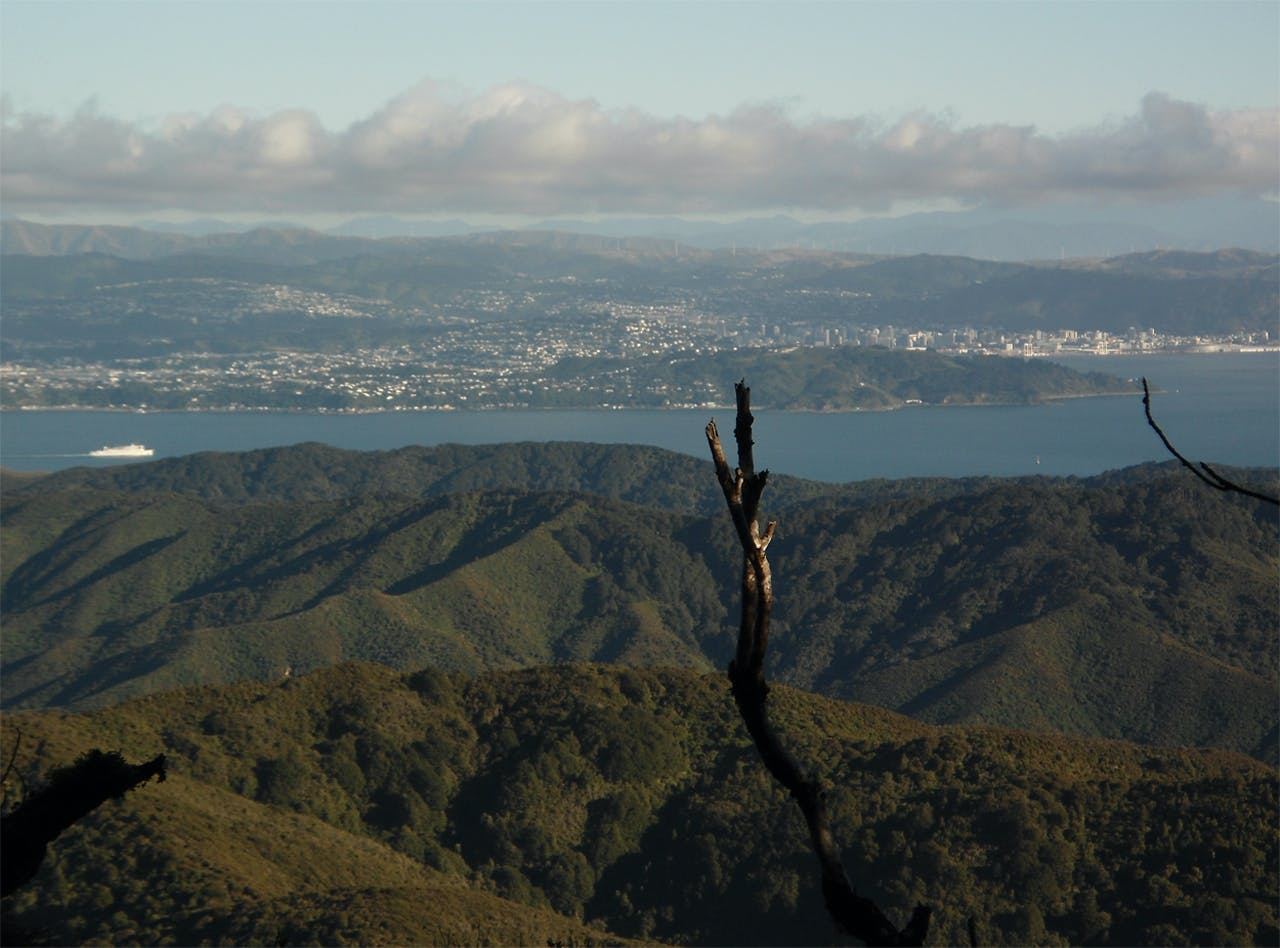 View of Wellington and its harbour from close to McKerrow summit. Photo: Matthew Pike