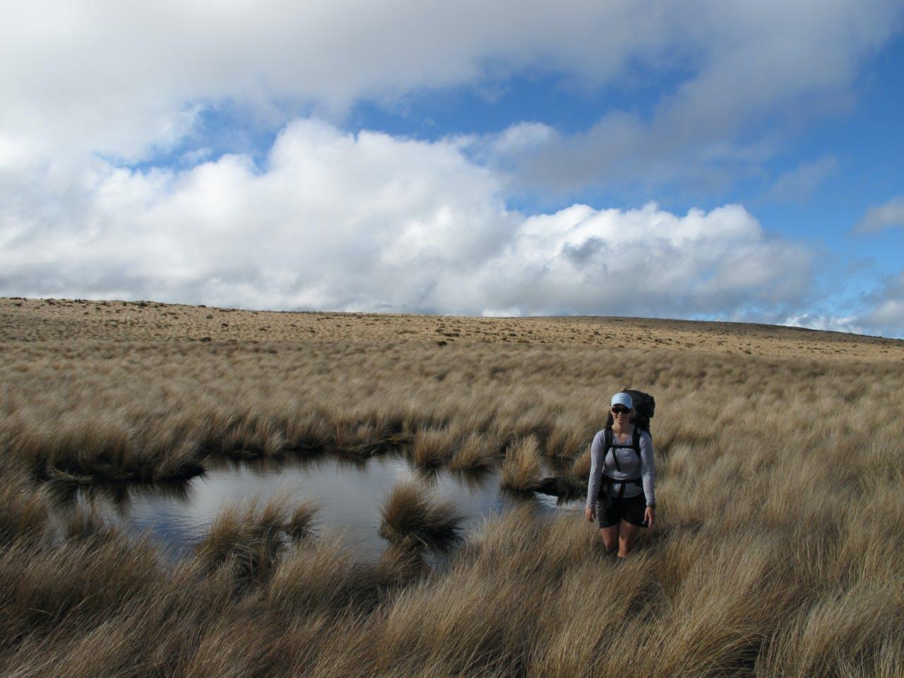 Pleasant travel on tussock tops on the Ruahine Range. Photo: Richard Davies