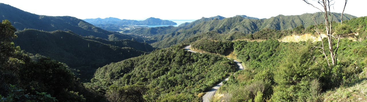 Coromandel's mayor wants to create a world-class multi-day walk in the forest park. Photo: Josh Gale