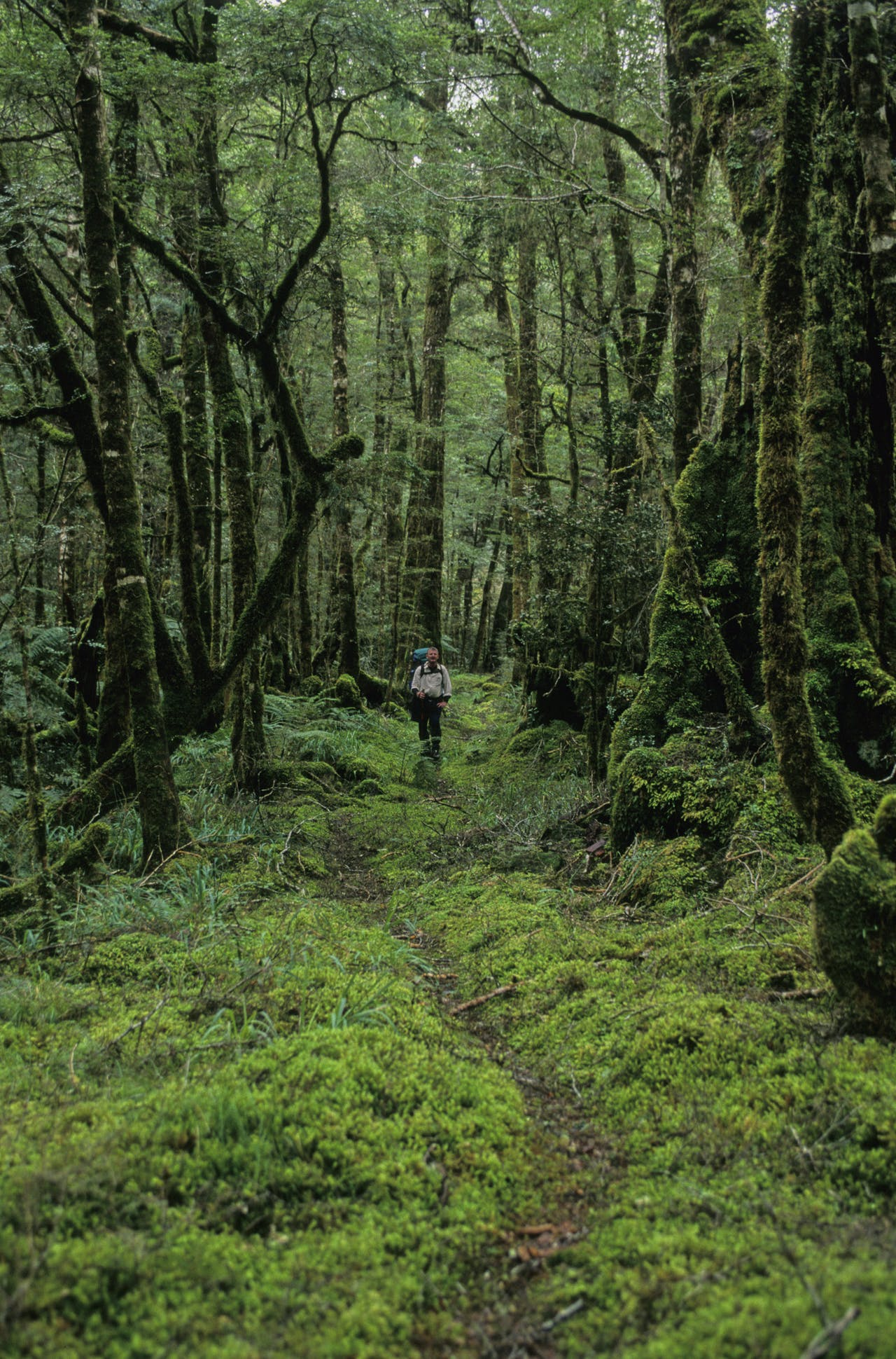 On the forested track to Kirwans Hut