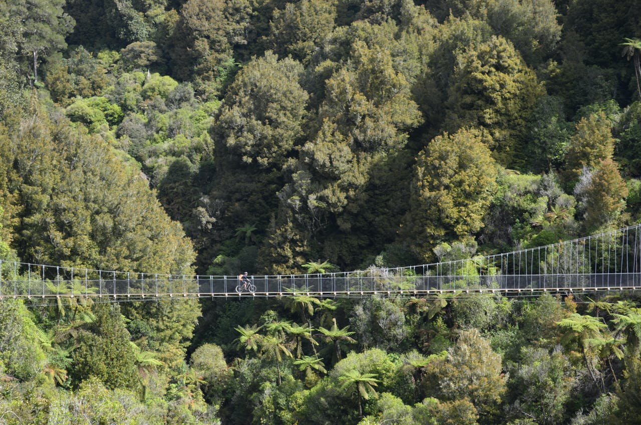 The 77km Timber Trail includes gnarly bridges and 800-year-old trees. Photo: Jonathan Kennett
