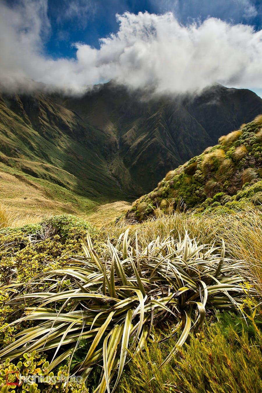 Mitre (1571m) the Tararua's highest peak. Head of the South Mitre Stream
