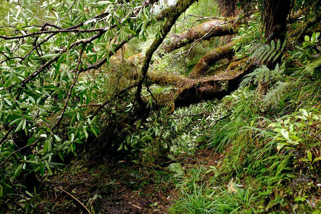 Heavy storms caused significant treefall in Whirinaki Conservation Park. Photo: DOC
