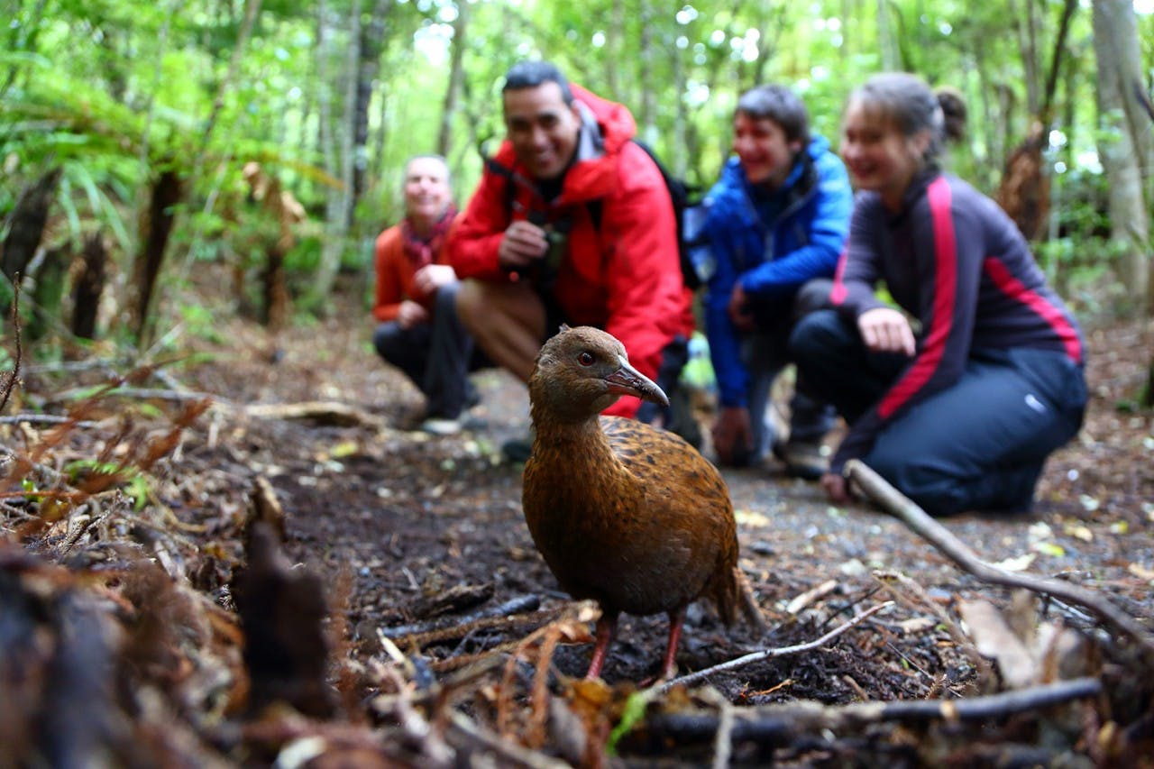 Weka and other native birds can be seen. Photo: Stewart Island Promotions
