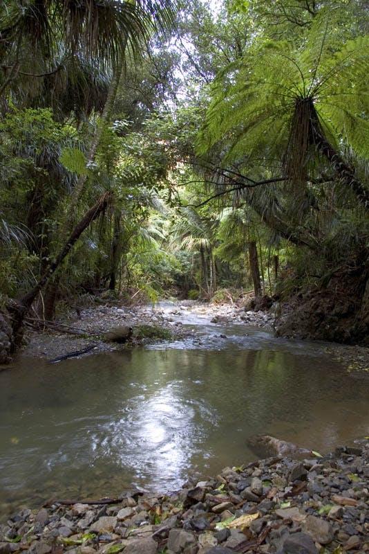 Nearby Catchpool Stream. Photo: DOC