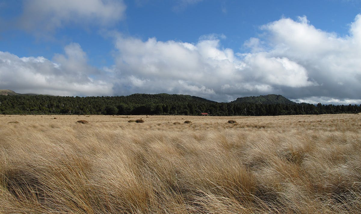 The tussocky Mangaohane Plateau from Ruahine Corner Hut. Photo: Richard Davies
