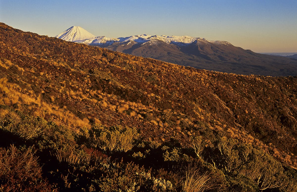 The mountains of the Central Plateau can be viewed from Urchin. Photo: Shaun Barnett/Black Robin Photography