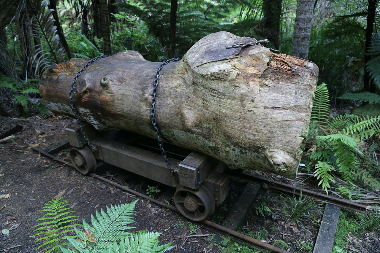 A reminder of the Waitakere Ranges' logging history. Photo: matthew Pike