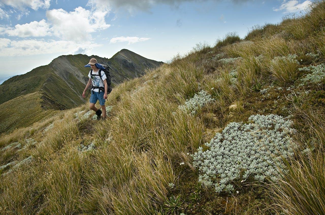 On the tops, heading to Ranioteatua with Three Johns behind. Photo: Shaun Barnett/Black Robin Photography