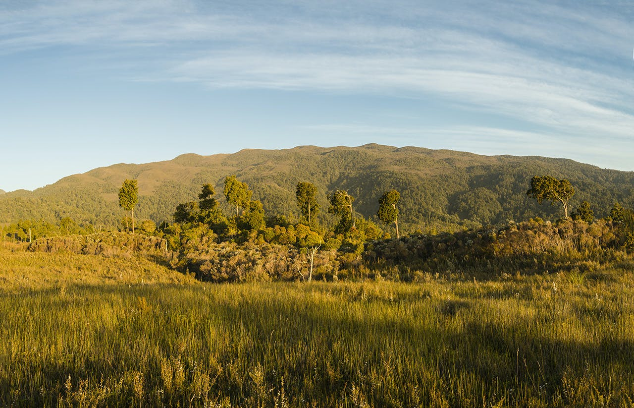 Ruahine Forest Park would lose 22ha of conservation land if the swap goes through. Photo: Neil Silverwood