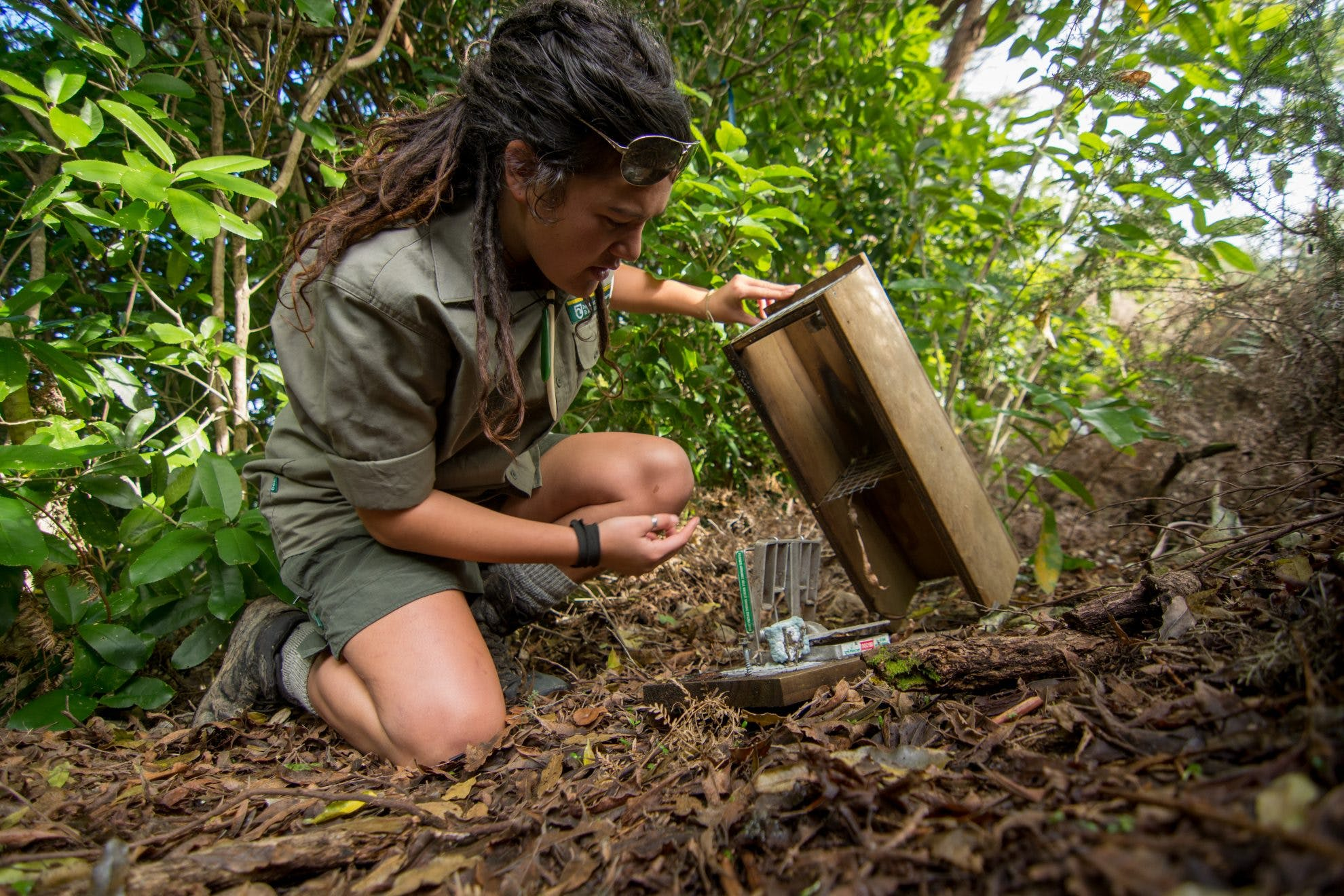 Predator trapping course launched by Minister - Wilderness